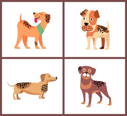 Pedigree Dogs With Unusual Fur Color and Spots