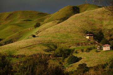 Cali hills