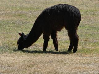 Cusco au Pérou