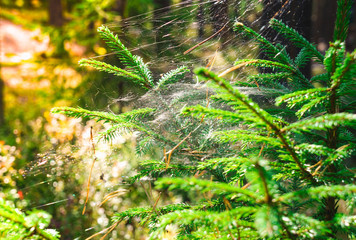Cobweb on a tree branch in the sunlight
