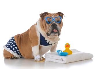 dog wearing a bikini