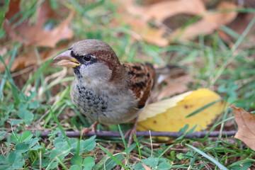 Fotoväggar - brauner Vogel