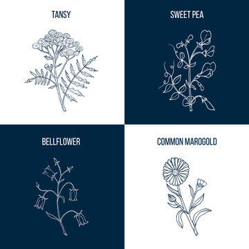 Set of four hand drawn eatable and medicinal plants