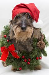 Buon Natale Cane Bassotto
