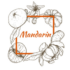 Frame with mandarins in retro vintage hand drawn, sketches, engraved style. Design elements for banner, cover, label, package, promote. Isolated on white background. Modern vector illustration.