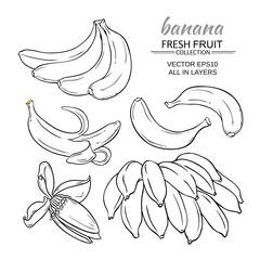 banana fruits vector set