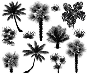 Tropical plants silhouettes (coconut palm, monstera, fan palm, rhapis). Set of hand drawn vector illustrations on white background.