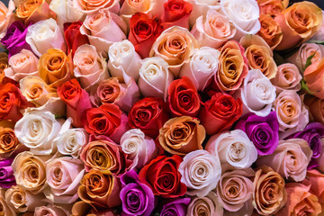 Beautiful bouquet of lots of colorful roses white red tea orange purple background close up