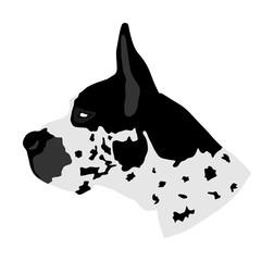 Portrait of Great Dane vector illustration isolated. Harlequin dog. German dog. Beware of dog. Alert sign.