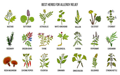 Best herbs for allergy relief