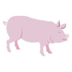 Pink Pig Vector Illustration Isolated on White