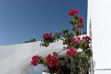 Traditional greek street with flowers on the wall, Santorini Island