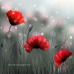 Vector background or card. Meadow with poppies and grass. Sky, bokeh and sparks. Imitation black and white photos. Perfect for announcements, invitations and greetings. Remembrance Day