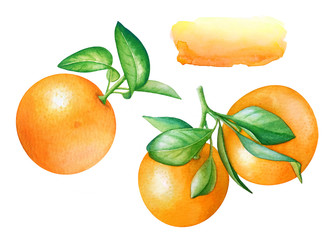 Watercolor collection of hand drawn orange fruits with green leaves and abstract background for text on white background.