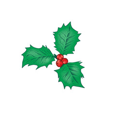 Christmas holly leaves and berries holiday decoration
