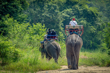 tourist ride the adventure elephant trekking through the jungle in Thailand with copy space