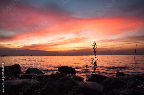 Scenery Nature Background Beautiful Evening Sky With Plants In Sea Image For Seascape Twilght