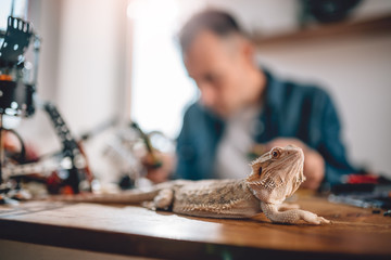 Wall Mural - Lizard on the table