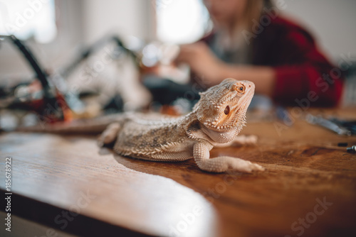 Wall mural Lizard on the wooden table
