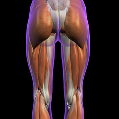 Female Posterior Hip and Leg Muscles on Black
