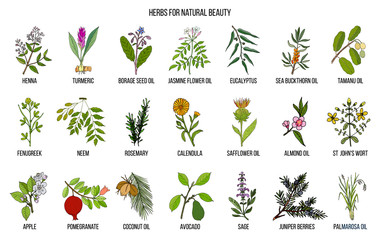 Best herbs for natural beauty