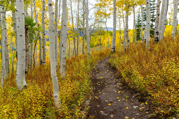 Autumn Mountain Trail - A remote mountain hiking trail winding through an autumn aspen grove in Routt National Forest, near Steamboat Springs, Colorado, USA.