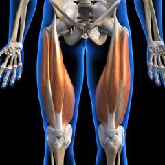 Male Anterior Quadriceps Muscles on Black