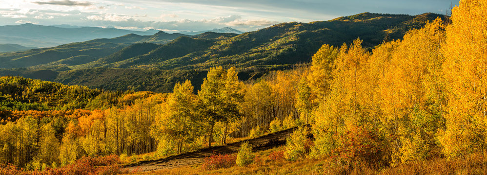Sunset Golden Valley - A panoramic autumn sunset view of golden aspen grove in a mountain valley, Routt National Forest, Steamboat Springs, Colorado, USA.