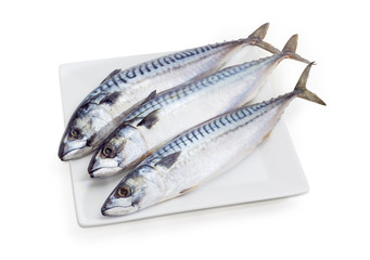 Three uncooked Atlantic mackerel on a white dish