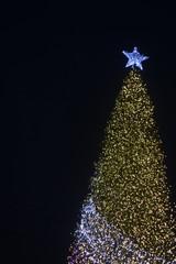 colorful light bokeh  and Christmas tree background, light abstract art , celebrate festival season.