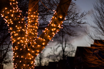 Up close exterior nighttime shallow depth of field stock photo of tree wrapped with christmas lights with semi cloudy night sky in background in Buffalo New York