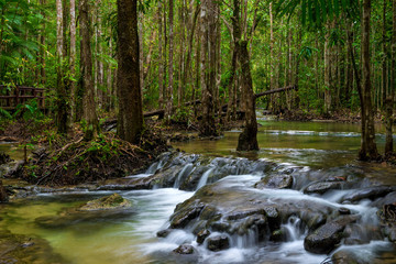 dense Thai jungle with the current river - a beautiful landscape