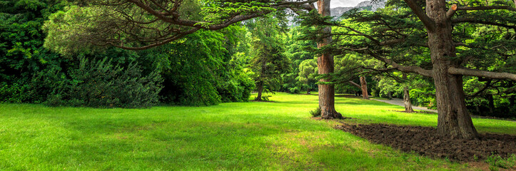 Green lawn with beautiful trees in Park summer, border design panoramic banner