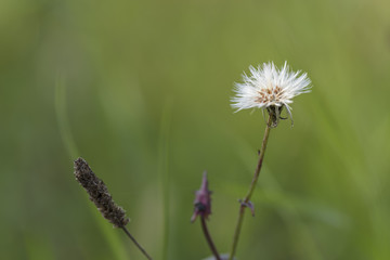 seeds of wild grass