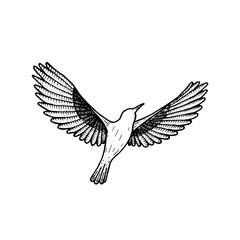 bird flying. illustration vector. hand drawing line art of animal. bird isolated line on white background. symbol of freedom. tattoo design.