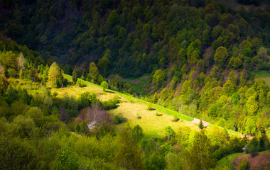 spot of light on forested hillside. lovely nature background in springtime