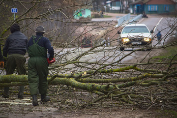 Three workers are picking up a fallen tree from the road