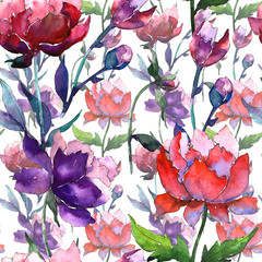 Wildflower peony flower pattern in a watercolor style. Full name of the plant: peony. Aquarelle wild flower for background, texture, wrapper pattern, frame or border.
