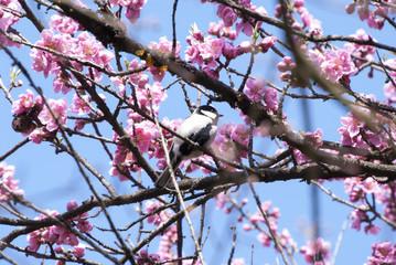 桃の花とエナガ