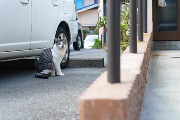 住宅街の野良猫
