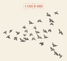 A flock of birds drawn vector illustration, sketch