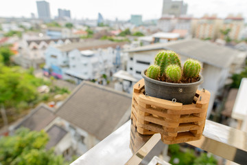 Green Cactus Outdoors In Balcony