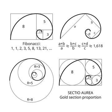 Golden fibonacci ratio spirals. Gold section proportion vector visualization