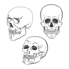 Set of vector skulls on white background