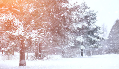 Winter landscape snow covered expanses. A park in the winter in