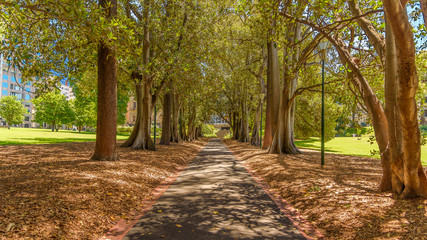 A tree lined path through Treasury Gardens in Melbourne, looking north west towards the old treasury building