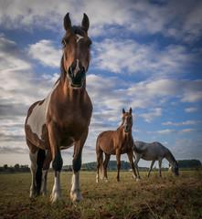 3 chevaux curieux de l'observateur