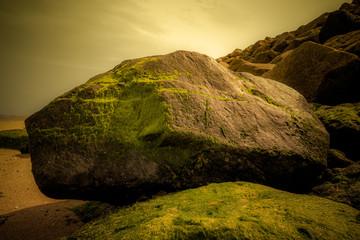 Roche recouvert d'algues sur une plage de l'Atlantique