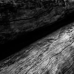 Gros plan sur deux troncs d'arbres desséchés et sans écorce