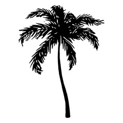 Monochrome black and white tropical palm tree sea ocean beach hand drawn sketch vector